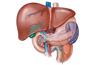 tips-on-how-to-keep-your-liver-healthy